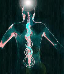 serpent coil up